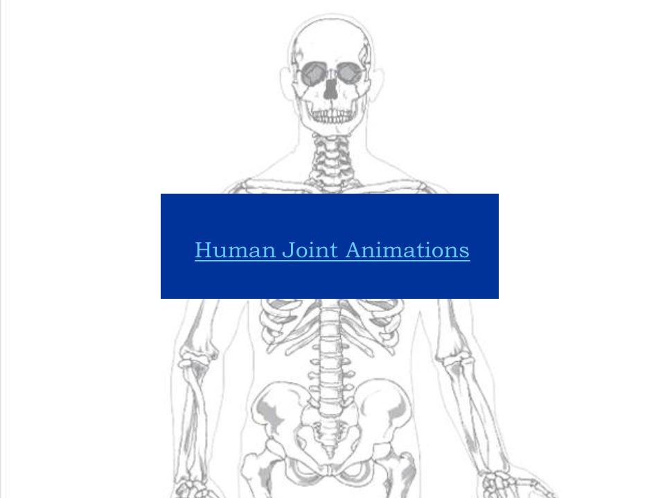 Human Joint Animations