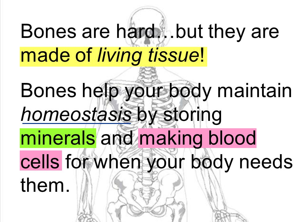 Bones are hard…but they are made of living tissue!