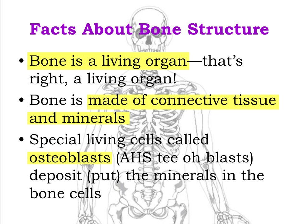 Facts About Bone Structure