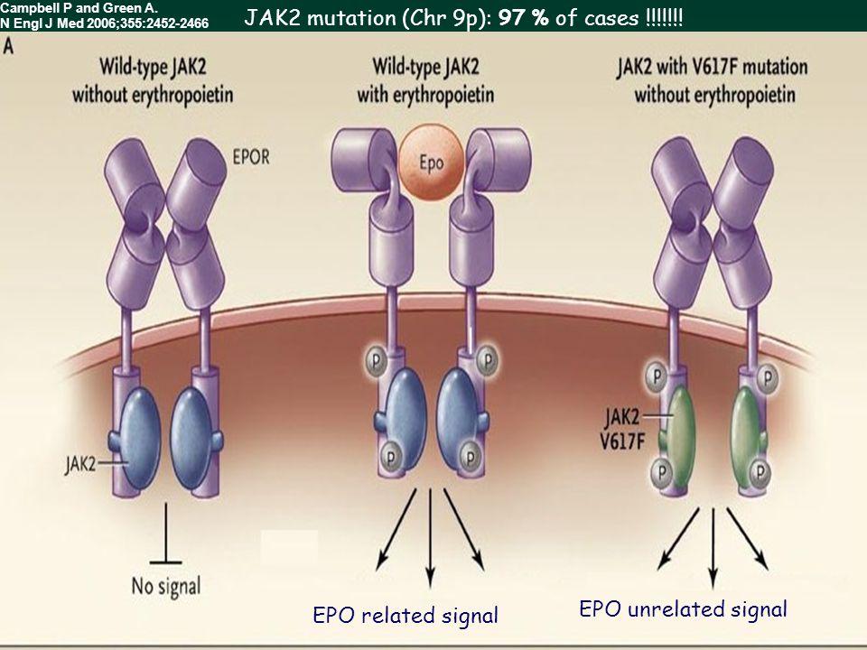 JAK2 mutation (Chr 9p): 97 % of cases !!!!!!!