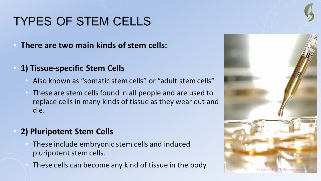 Types of Stem Cells There are two main kinds of stem cells: