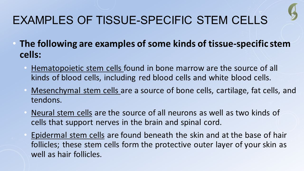 Examples of Tissue-Specific Stem Cells
