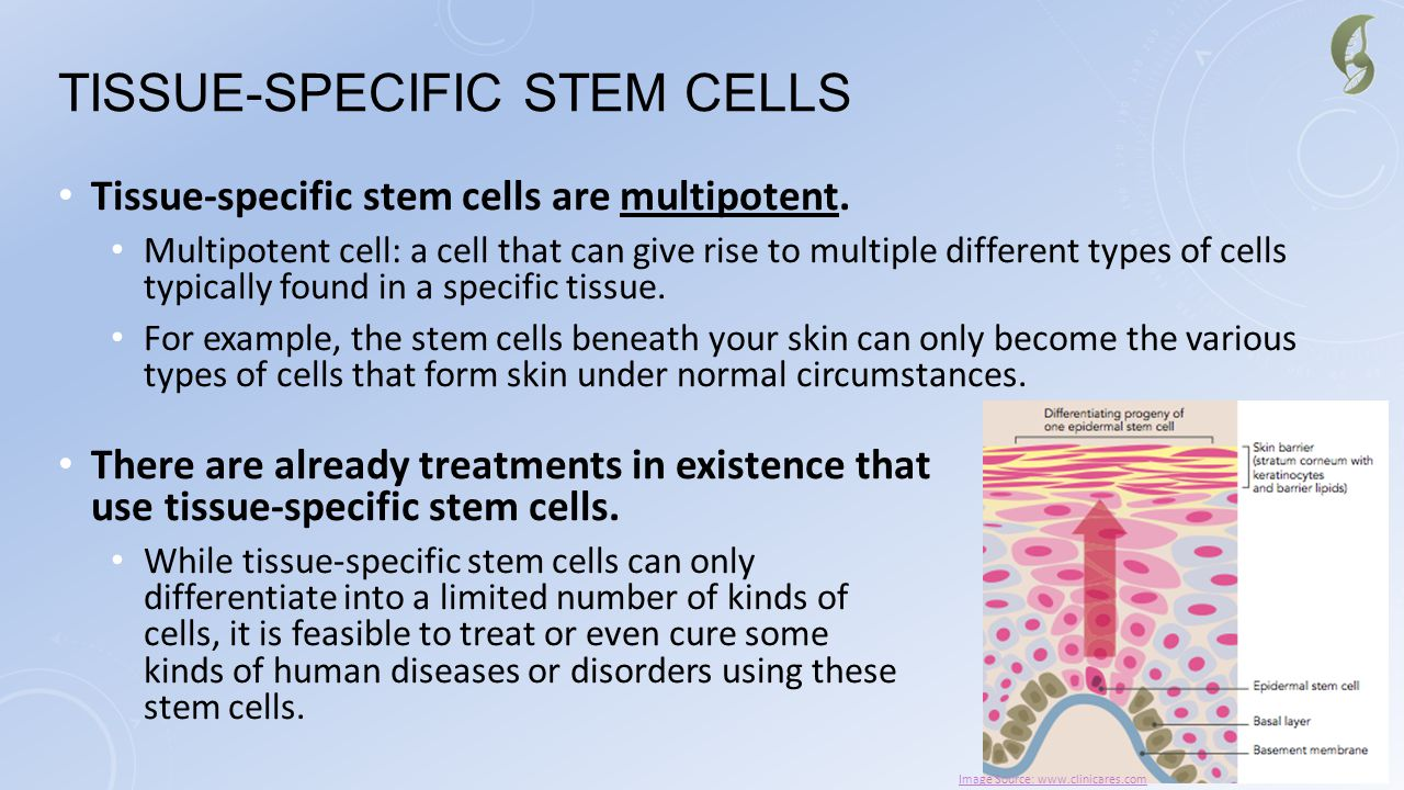 Tissue-Specific Stem Cells