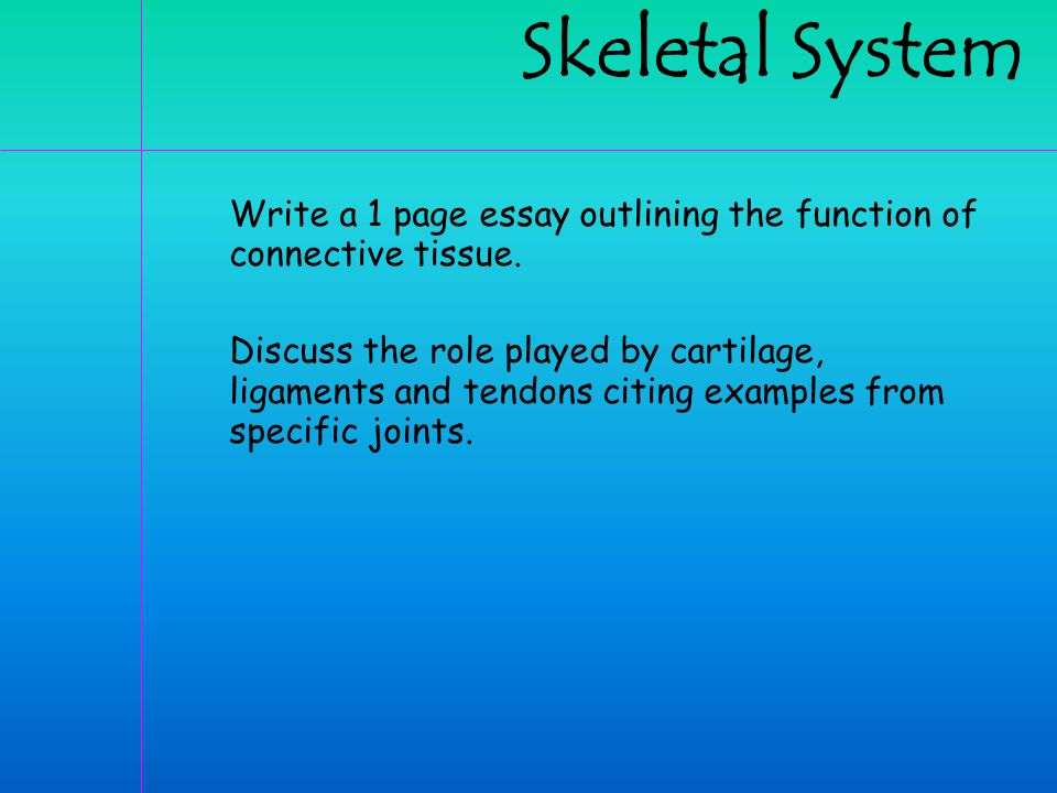 activity skeleton observation ppt  skeletal system write a 1 page essay outlining the function of connective tissue