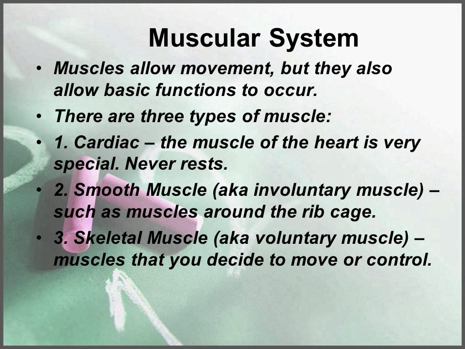 Muscular System Muscles allow movement, but they also allow basic functions to occur. There are three types of muscle: