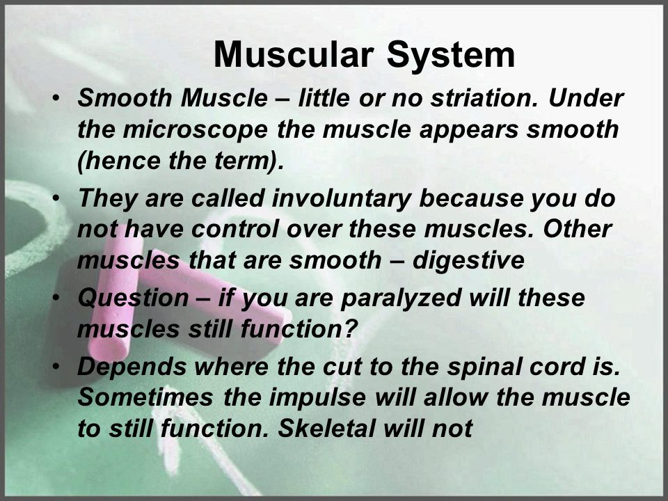 Muscular System Smooth Muscle – little or no striation. Under the microscope the muscle appears smooth (hence the term).