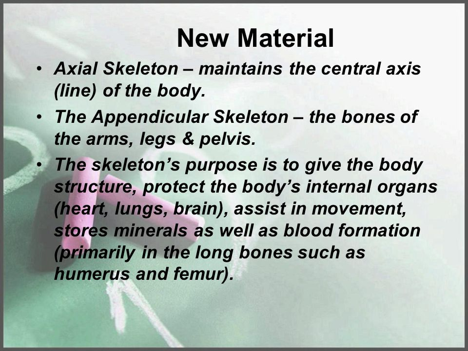 New Material Axial Skeleton – maintains the central axis (line) of the body. The Appendicular Skeleton – the bones of the arms, legs & pelvis.
