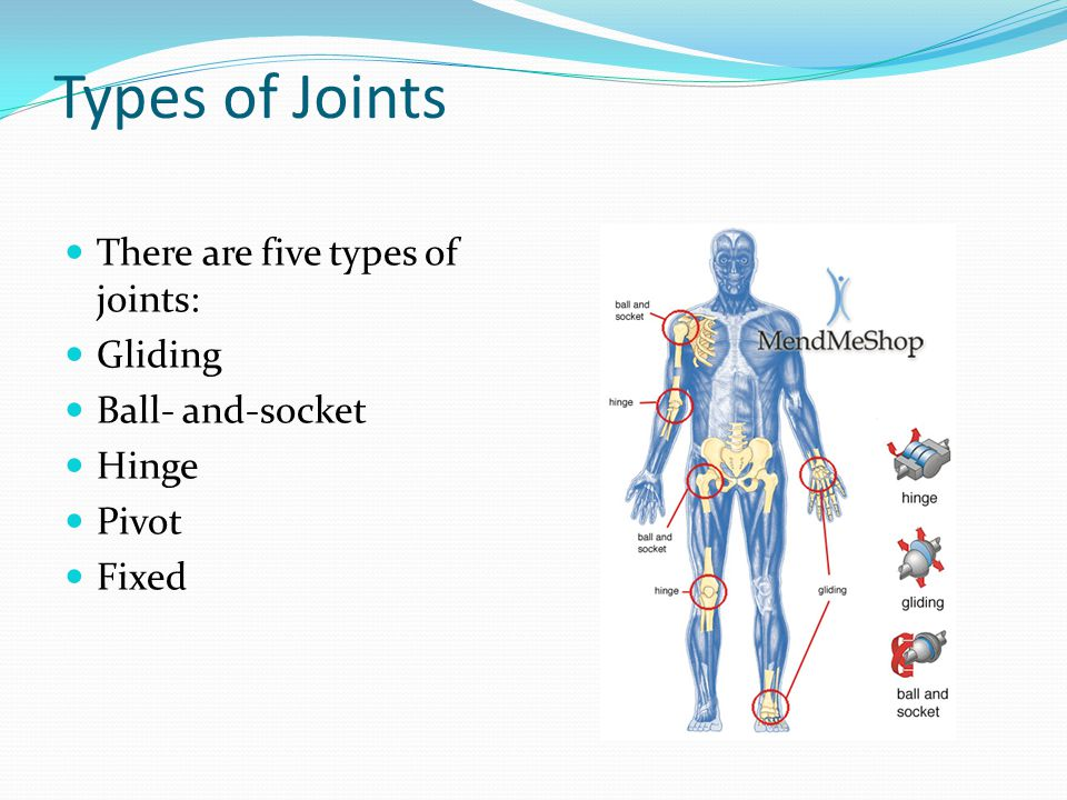 Types of Joints There are five types of joints: Gliding