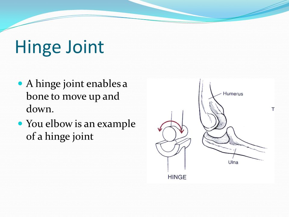 Hinge Joint A hinge joint enables a bone to move up and down.