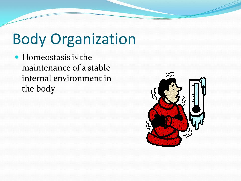 Body Organization Homeostasis is the maintenance of a stable internal environment in the body