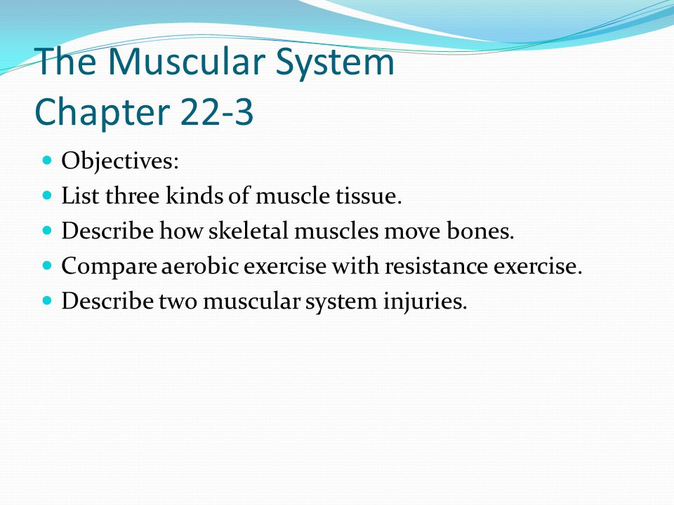 body organization and structure - ppt download, Muscles