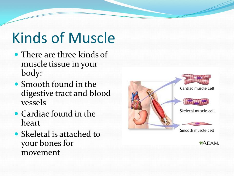 Kinds of Muscle There are three kinds of muscle tissue in your body: