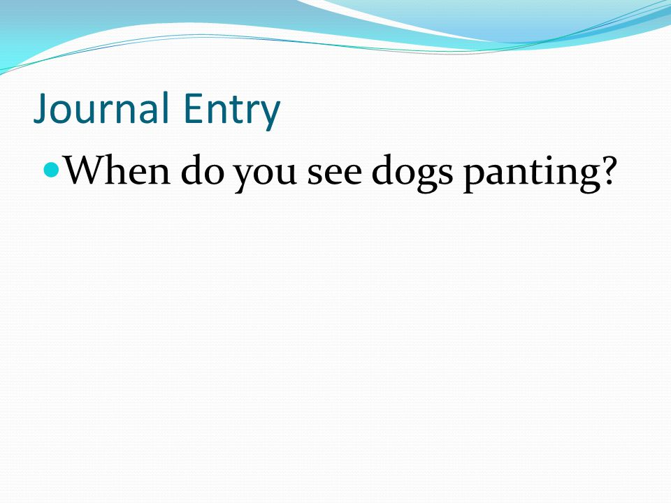Journal Entry When do you see dogs panting