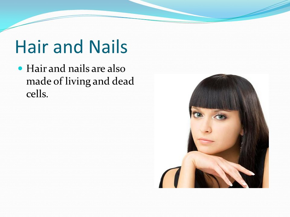Hair and Nails Hair and nails are also made of living and dead cells.