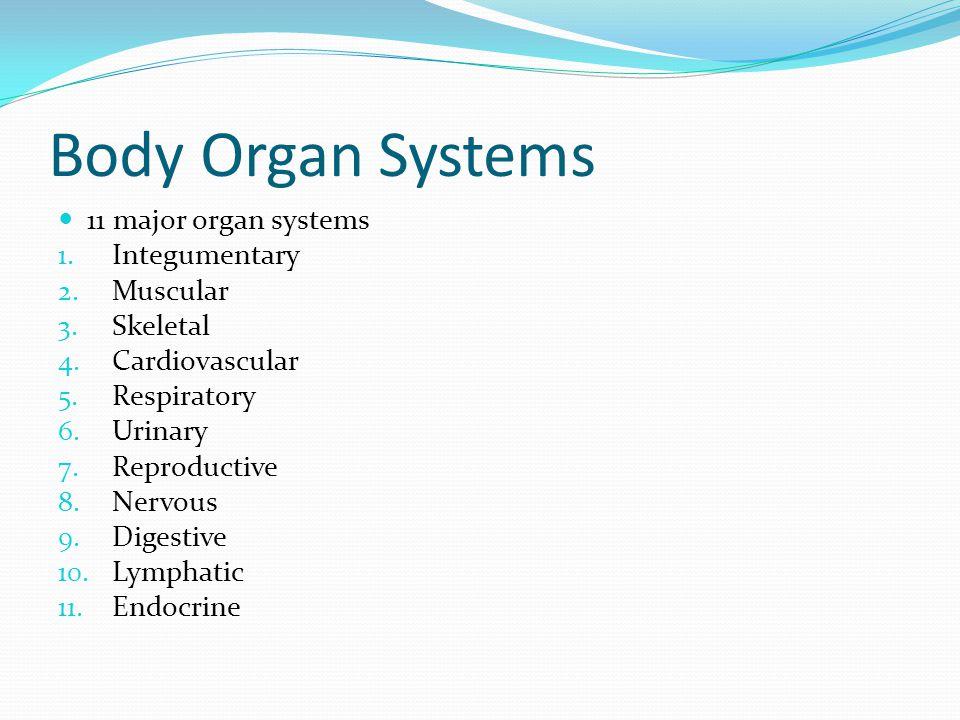 Body Organ Systems 11 major organ systems Integumentary Muscular