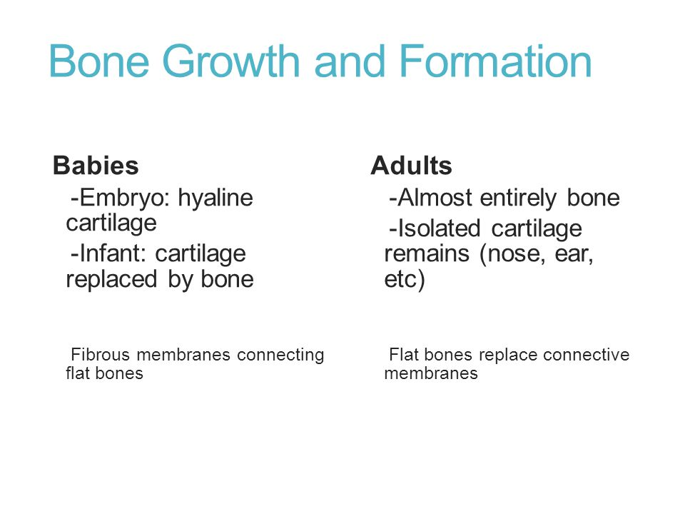 Bone Growth and Formation