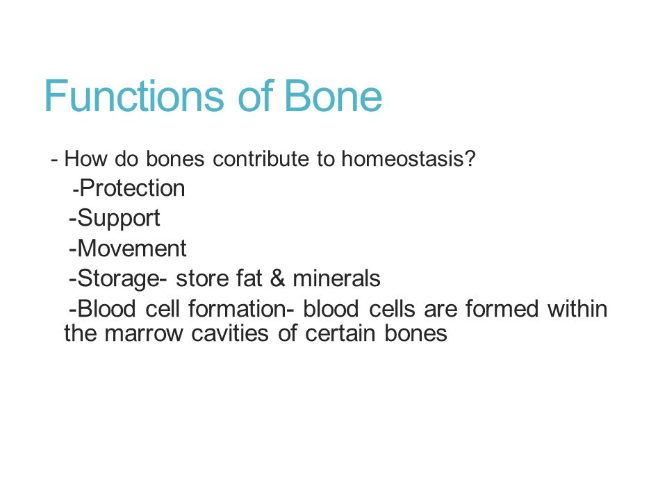 Functions of Bone -Support -Movement -Storage- store fat & minerals