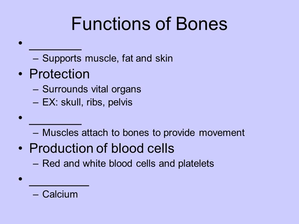 Functions of Bones _______ Protection Production of blood cells
