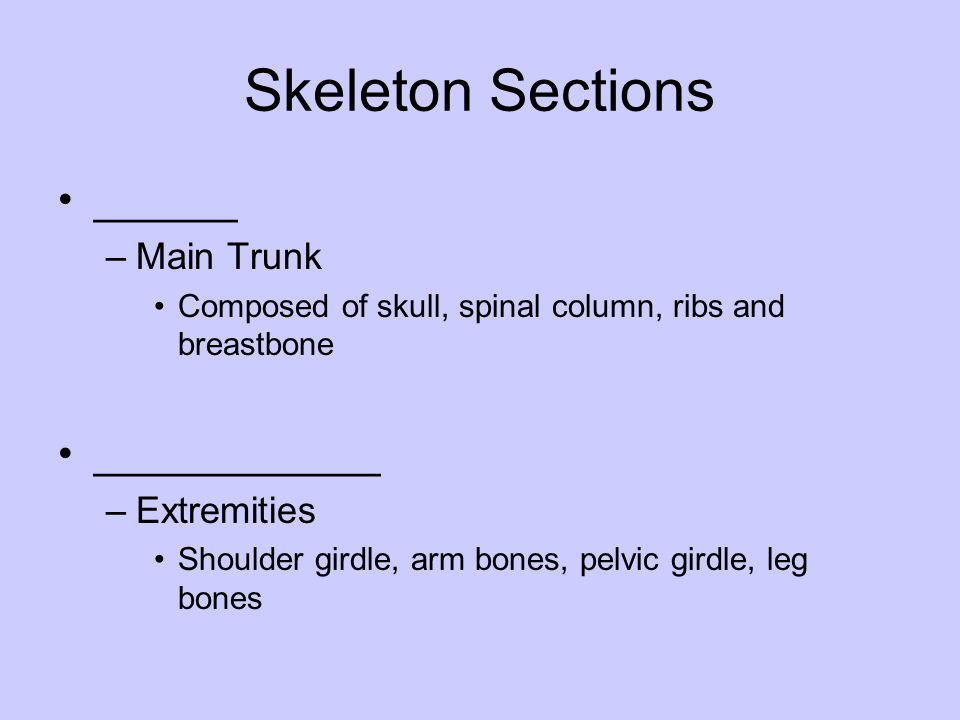Skeleton Sections ______ ____________ Main Trunk Extremities