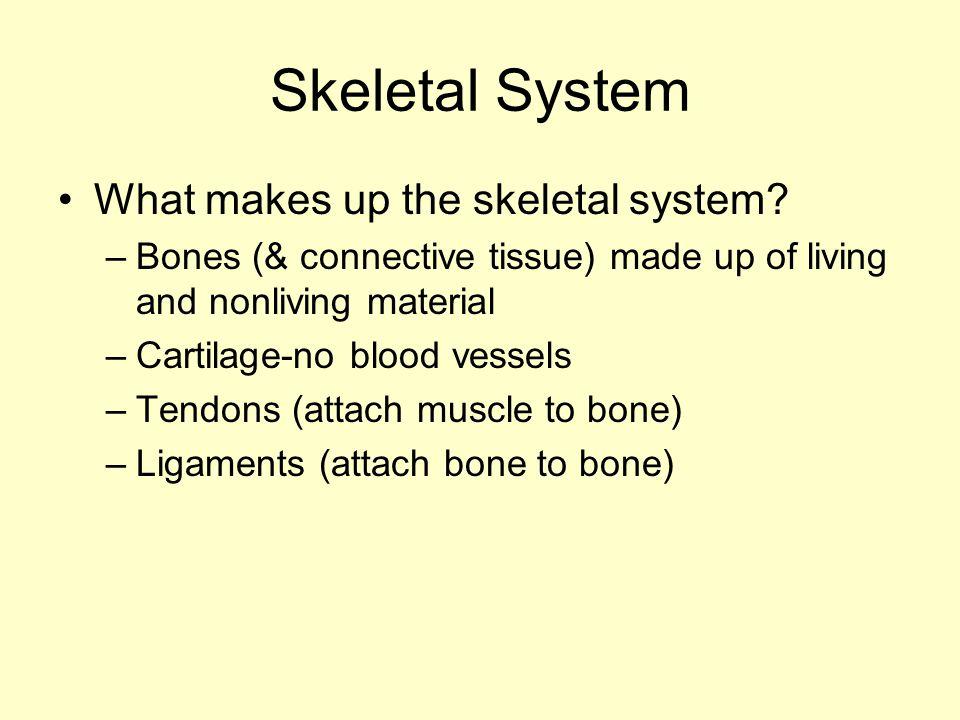 Skeletal System What makes up the skeletal system