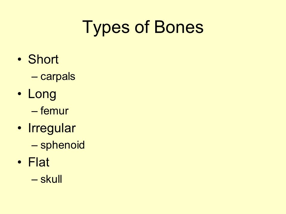 Types of Bones Short carpals Long femur Irregular sphenoid Flat skull