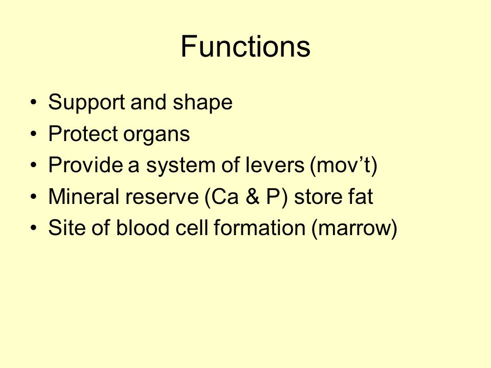 Functions Support and shape Protect organs