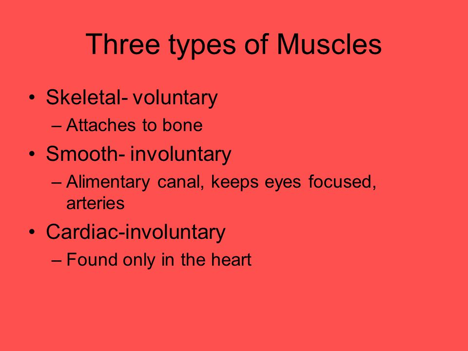 Three types of Muscles Skeletal- voluntary Smooth- involuntary
