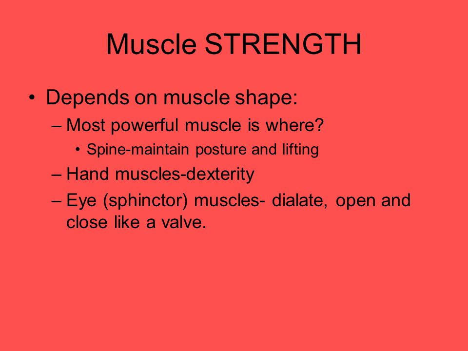 Muscle STRENGTH Depends on muscle shape: