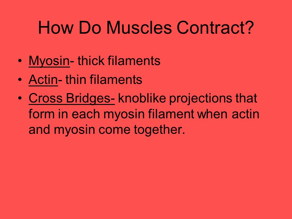 How Do Muscles Contract
