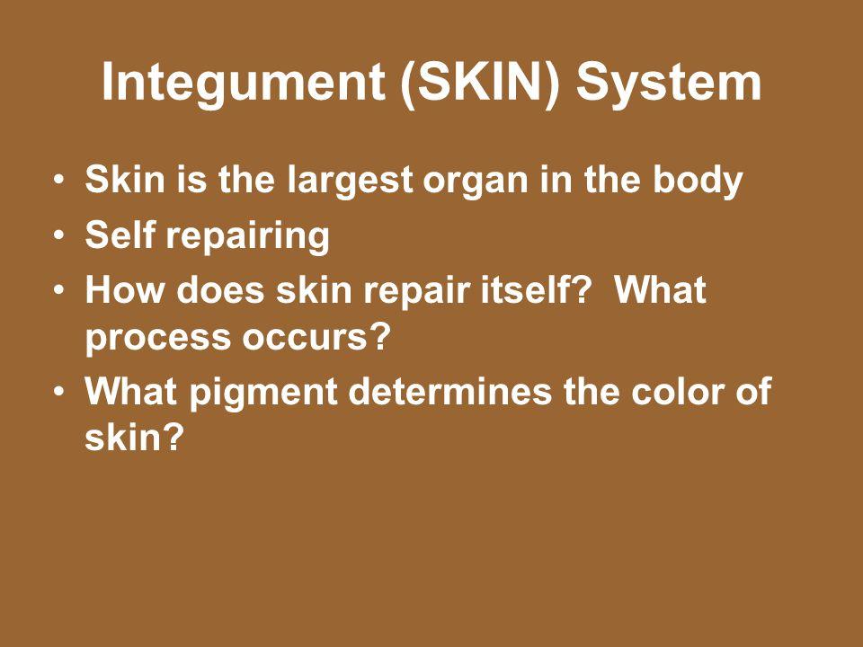 Integument (SKIN) System