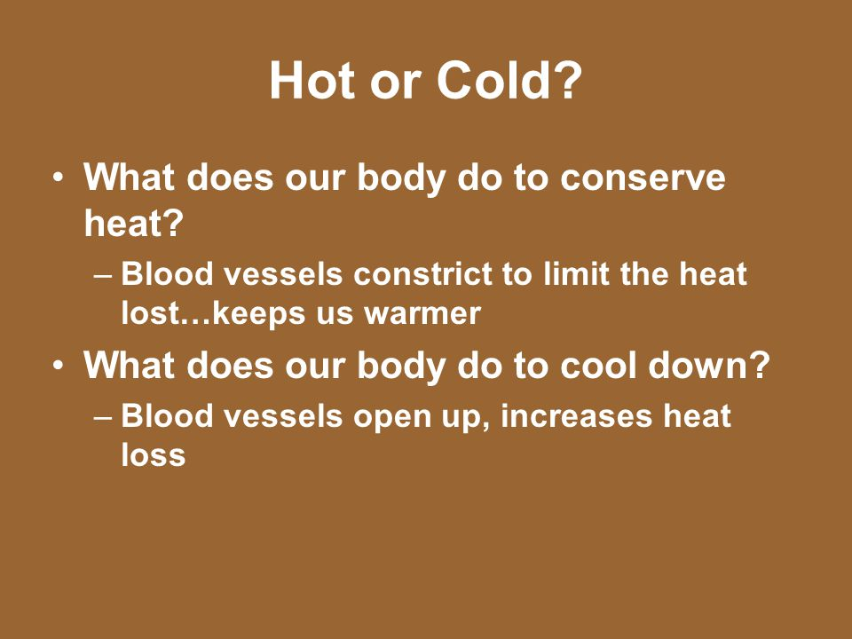 Hot or Cold What does our body do to conserve heat