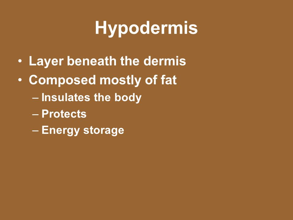 Hypodermis Layer beneath the dermis Composed mostly of fat