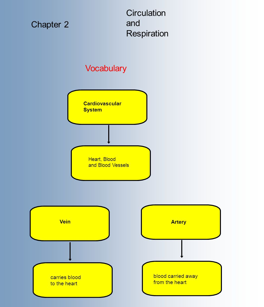Circulation and Respiration Chapter 2 Vocabulary Cardiovascular System