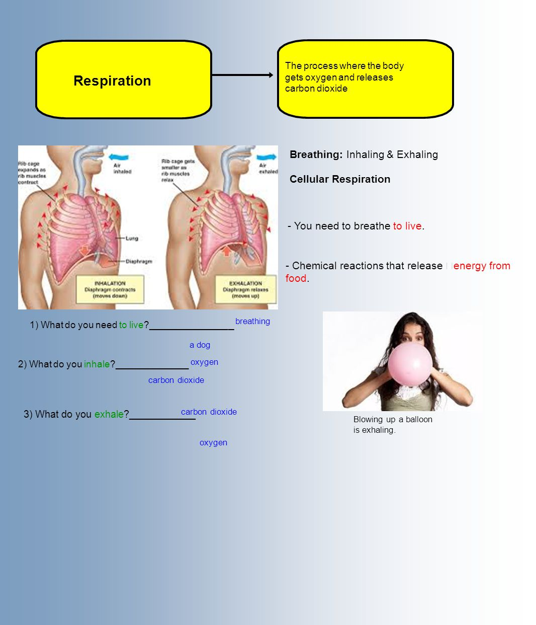 Respiration Breathing: Inhaling & Exhaling Cellular Respiration