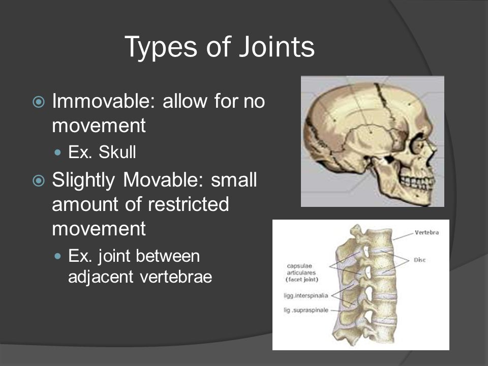 Types of Joints Immovable: allow for no movement