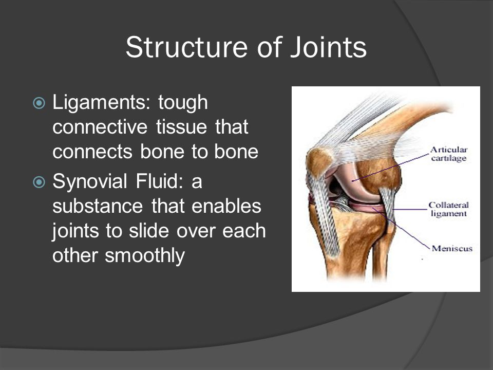 Structure of Joints Ligaments: tough connective tissue that connects bone to bone.