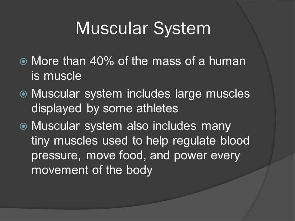 Muscular System More than 40% of the mass of a human is muscle