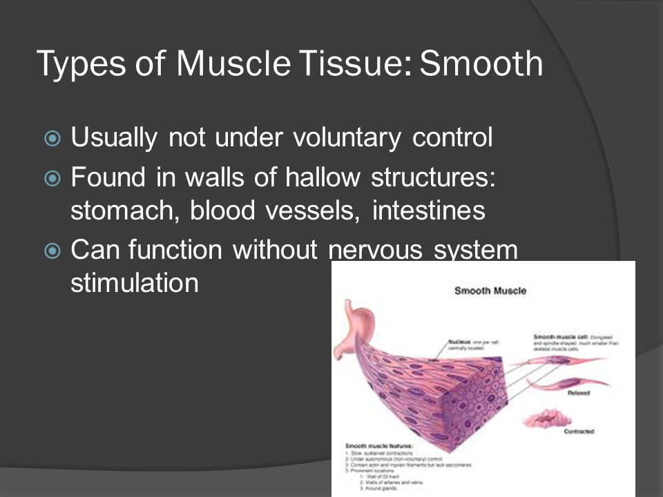 Types of Muscle Tissue: Smooth