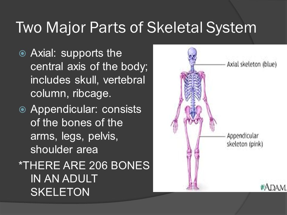 Two Major Parts of Skeletal System