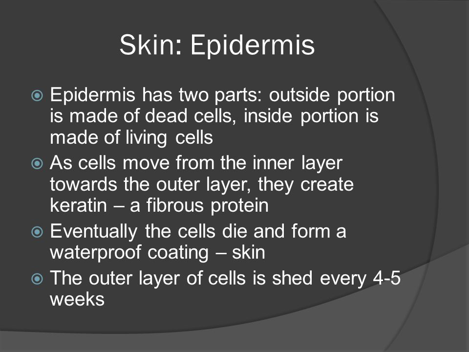 Skin: Epidermis Epidermis has two parts: outside portion is made of dead cells, inside portion is made of living cells.
