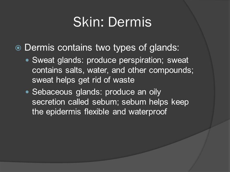 Skin: Dermis Dermis contains two types of glands: