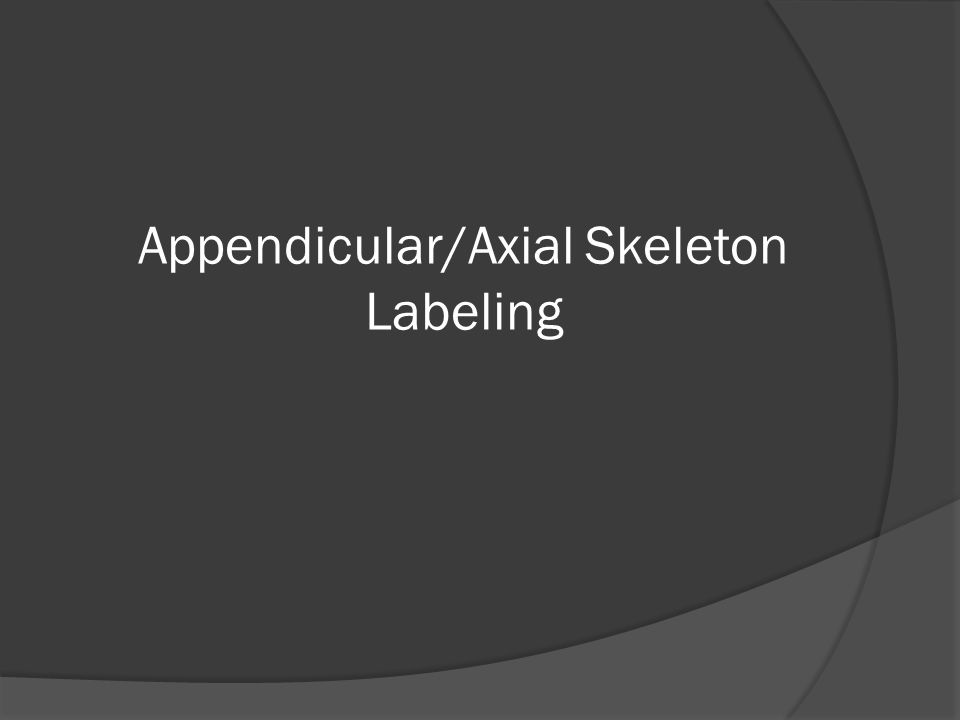 Appendicular/Axial Skeleton Labeling