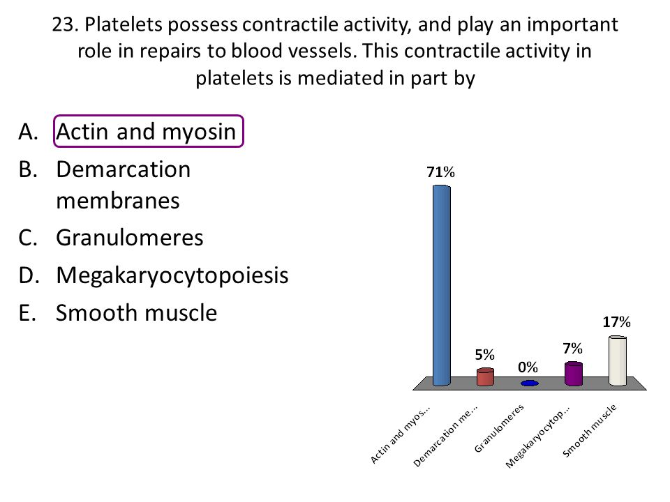 Demarcation membranes Granulomeres Megakaryocytopoiesis Smooth muscle