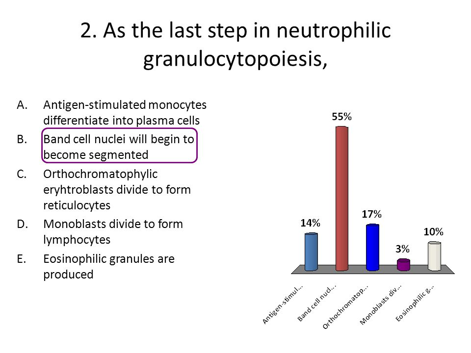 2. As the last step in neutrophilic granulocytopoiesis,