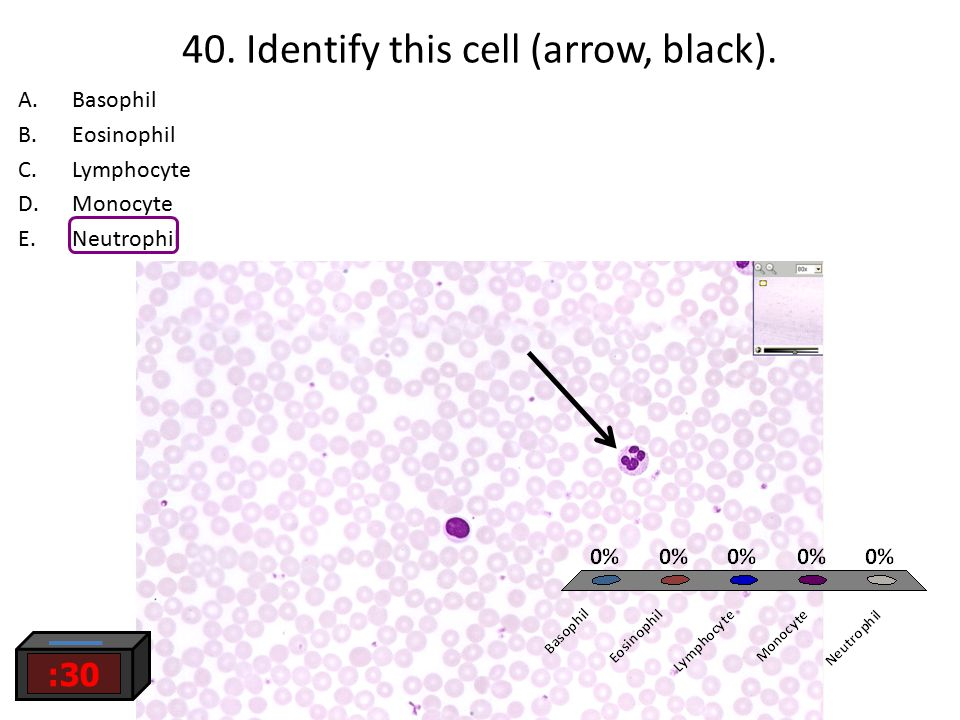 40. Identify this cell (arrow, black).