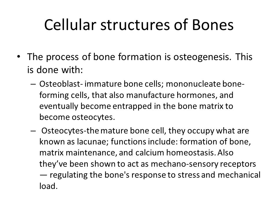 Cellular structures of Bones