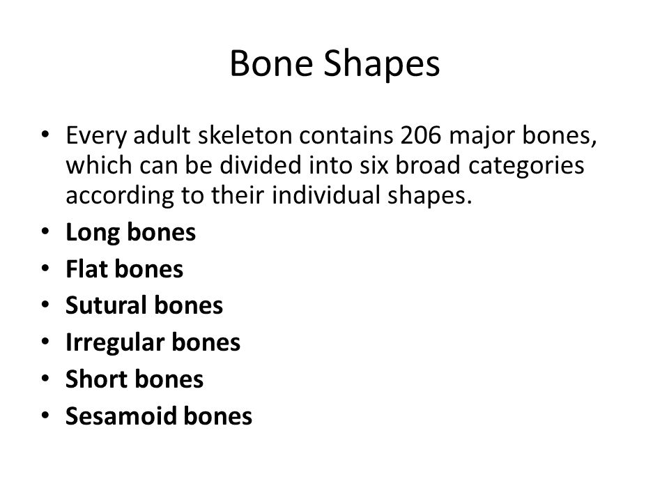 Bone Shapes Every adult skeleton contains 206 major bones, which can be divided into six broad categories according to their individual shapes.