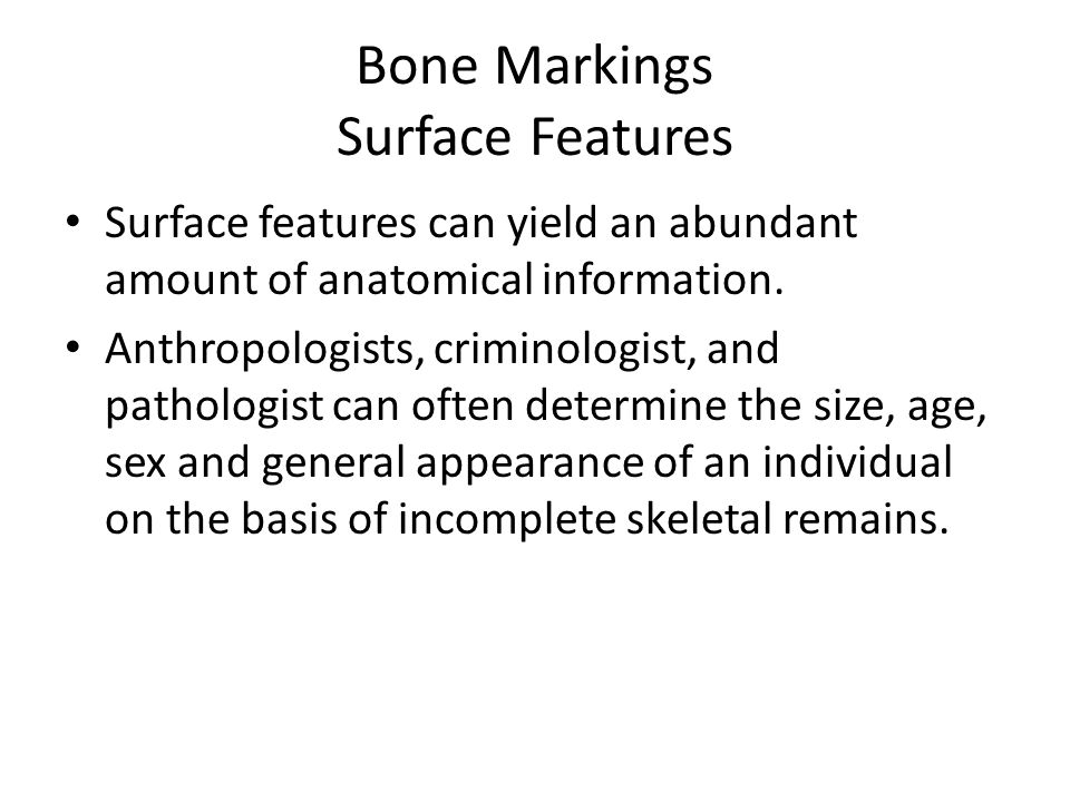 Bone Markings Surface Features