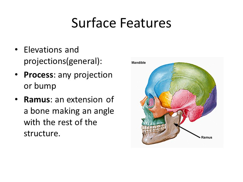 Surface Features Elevations and projections(general):