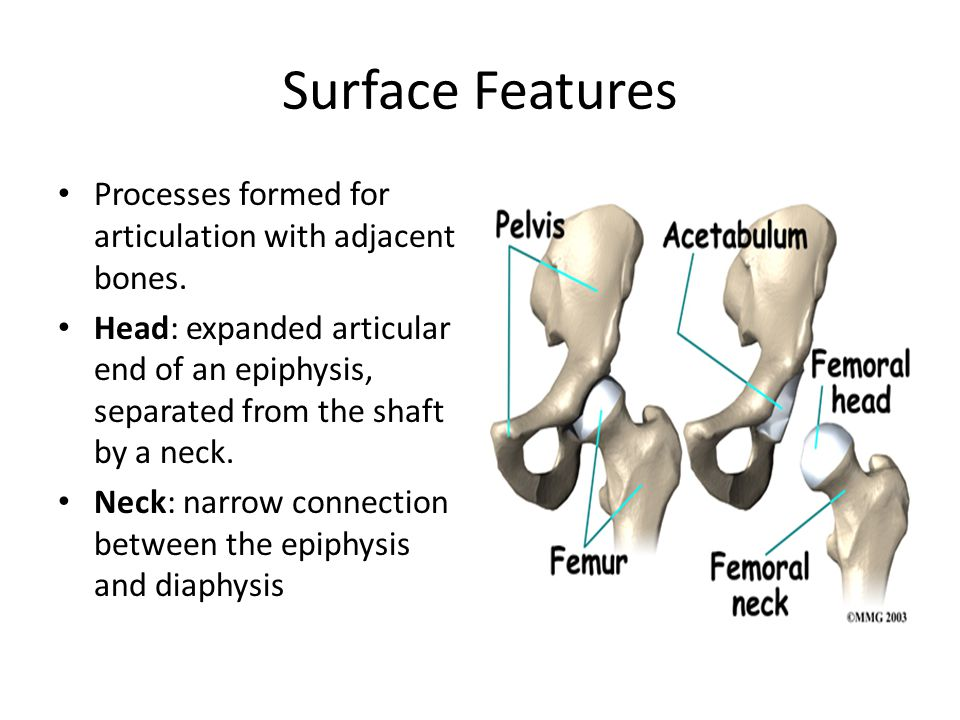 Surface Features Processes formed for articulation with adjacent bones.